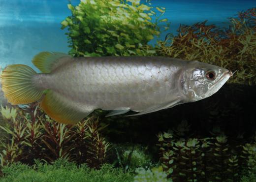 fish-health